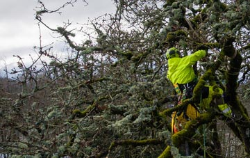 experienced Boston West arborists are needed