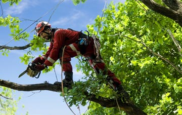 find trusted rated Boston West tree surgeons in Lincolnshire