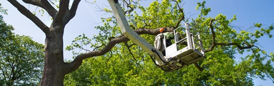 Boston West tree surgery services