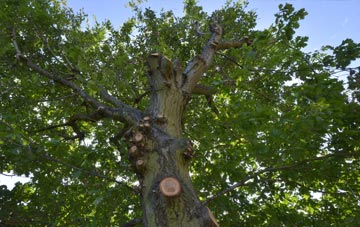 what is Boston West tree surgery?